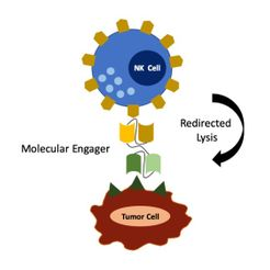 MOLECULAR ENGAGERS